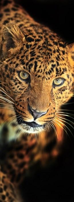 Фотообои DIVINO DECOR A-084 Леопард 100х270см - фото 11045