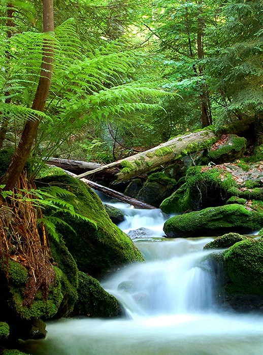 Фотообои DIVINO DECOR A-023 Зеленый лес 200х270см - фото 11595