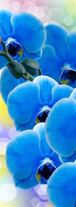 Фотообои DIVINO DECOR A-088 Орхидея синяя 100х270см - фото 11661