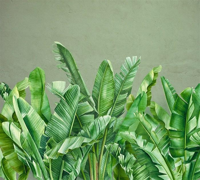 Фотообои DIVINO DECOR T-288 Банановые листья 300х270см - фото 13728