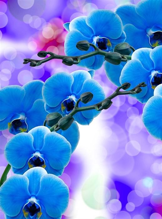 Фотообои DIVINO DECOR T-223 Синие орхидеи 200х270см - фото 14645