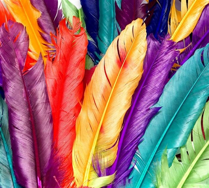 Фотообои DIVINO DECOR T-200 Разноцветные перья 300х270см - фото 14765