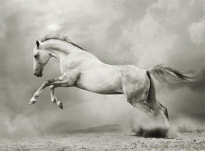 Фотообои DIVINO DECOR A-060 Белый конь 200х147см - фото 15473