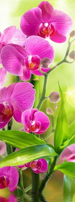 Фотообои DIVINO DECOR B-095 Сияющая орхидея 100х270см - фото 15549