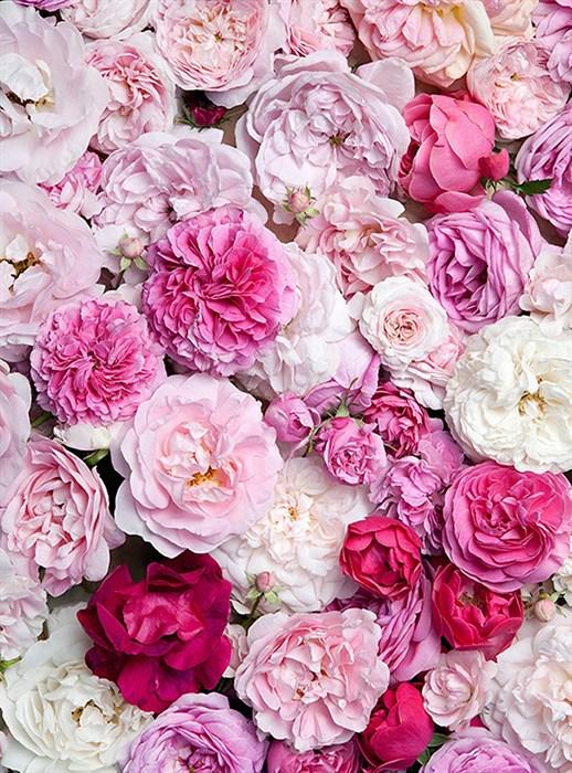 Фотообои DIVINO DECOR B-087 Крупные цветы  200х270см - фото 15560