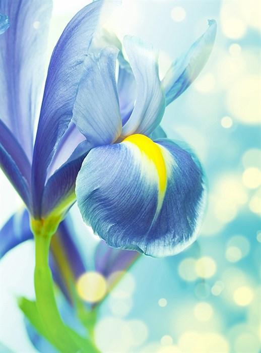 Фотообои DIVINO DECOR B-094 Синий ирис 200х270см - фото 15596