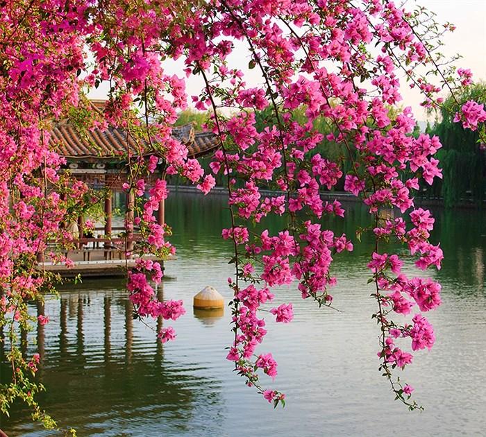 Фотообои DIVINO DECOR B-077 Цветущие ветви в саду Китая 300х270см - фото 15632