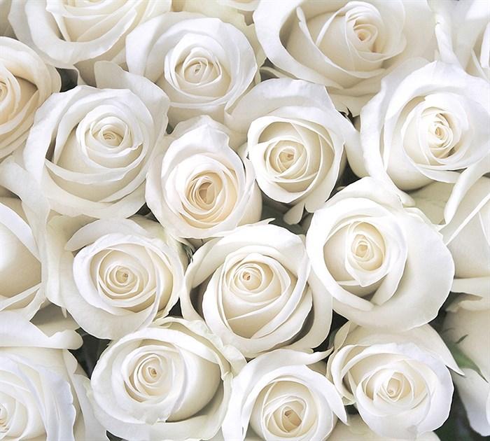 Фотообои DIVINO DECOR B-091 Розы белые 300х270см - фото 15659