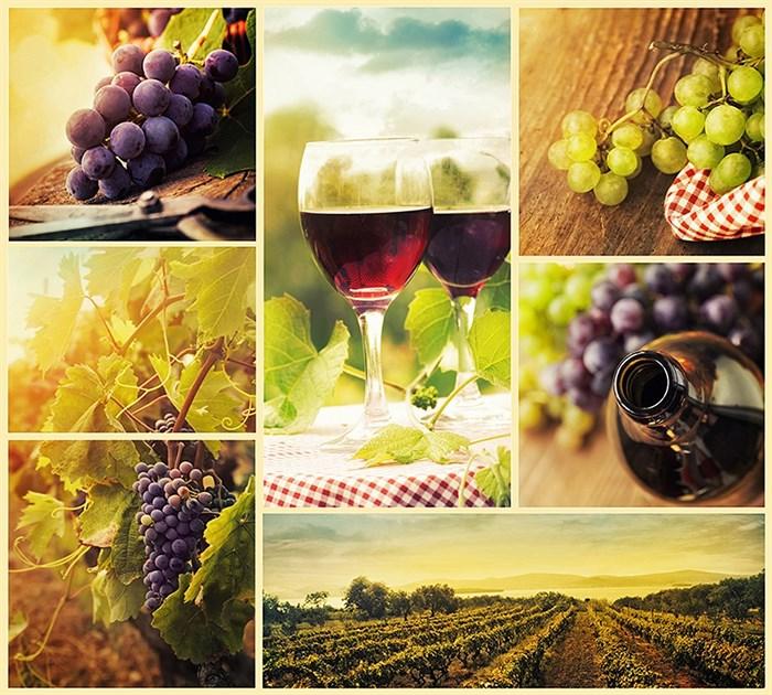 Фотообои DIVINO DECOR B-033 Виноградники микс 300х270см - фото 15739
