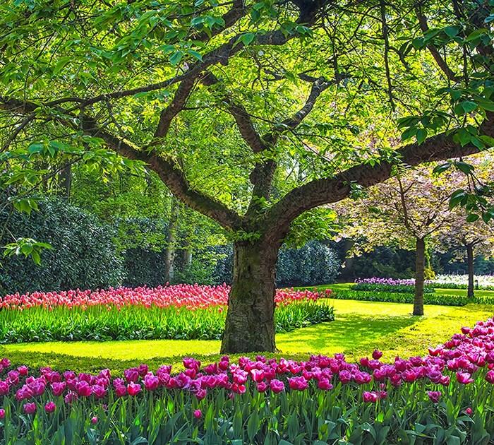 Фотообои DIVINO DECOR B-067 Дерево в саду 300х270см - фото 16288