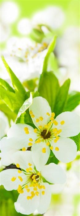 Фотообои DIVINO DECOR C-291 Цветы светлые 100х270см - фото 16997