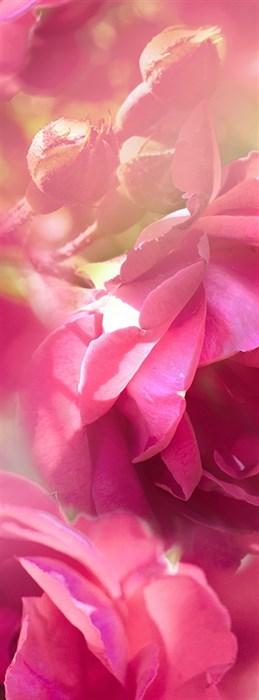 Фотообои DIVINO DECOR C-396 Розовые цветы 100х270см - фото 17015
