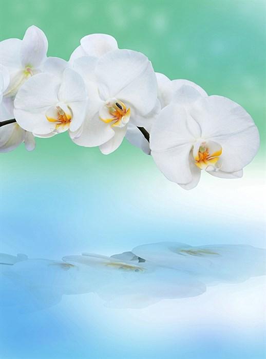 Фотообои DIVINO DECOR C-245 Орхидея с отражением 200х270см - фото 17060