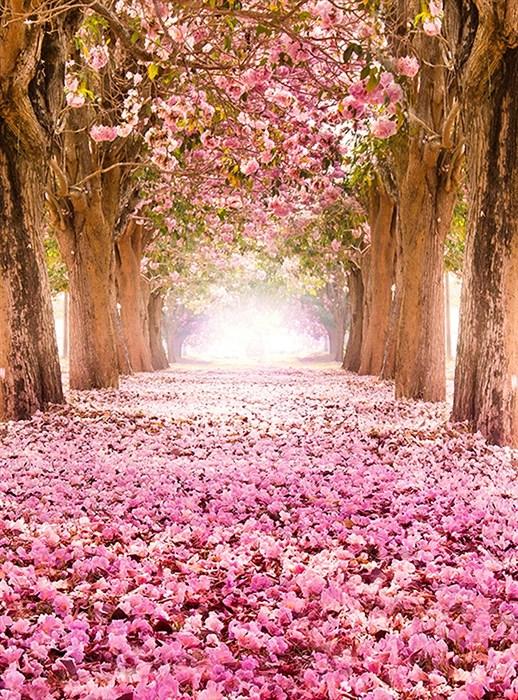 Фотообои DIVINO DECOR C-249 Цветущие деревья 200х270см - фото 17096