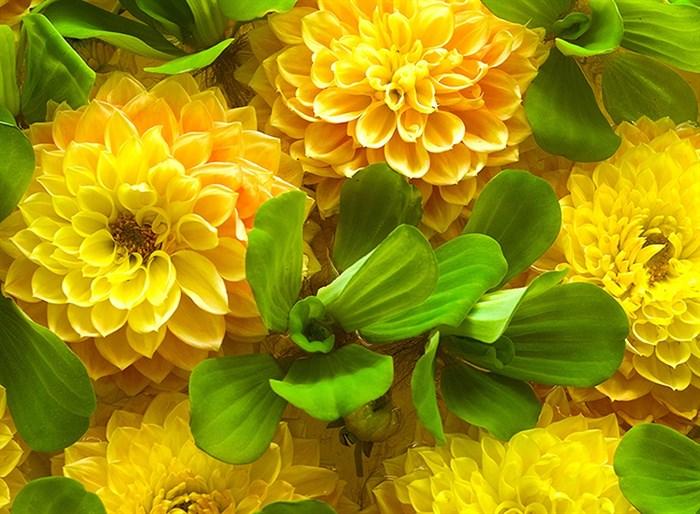 Фотообои DIVINO DECOR C-316 Желтые цветы 200х147см - фото 17132