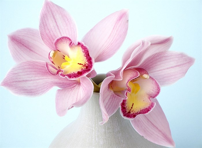 Фотообои DIVINO DECOR C-320 Орхидея 3  200х147см - фото 17168
