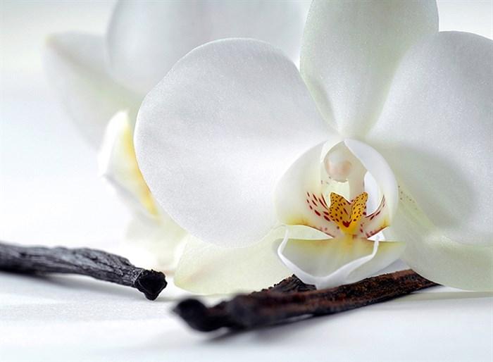 Фотообои DIVINO DECOR C-321 Орхидея и ваниль 200х147см - фото 17177