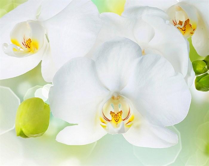 Фотообои DIVINO DECOR C-379 Белая орхидея 300х238см - фото 17242
