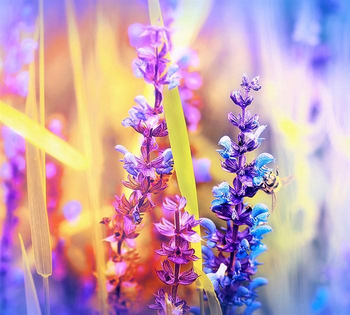 Фотообои DIVINO DECOR C-151 Радужные цветы 300х270см - фото 17615