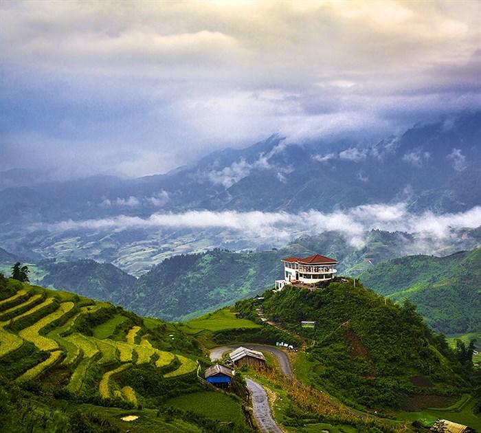 Фотообои DIVINO DECOR C-120 Чайные плантации 300х270см - фото 18321