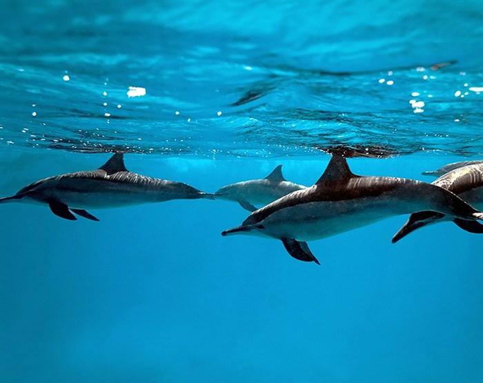 Фотообои DIVINO DECOR C-019 Дельфины 300х238см - фото 18635