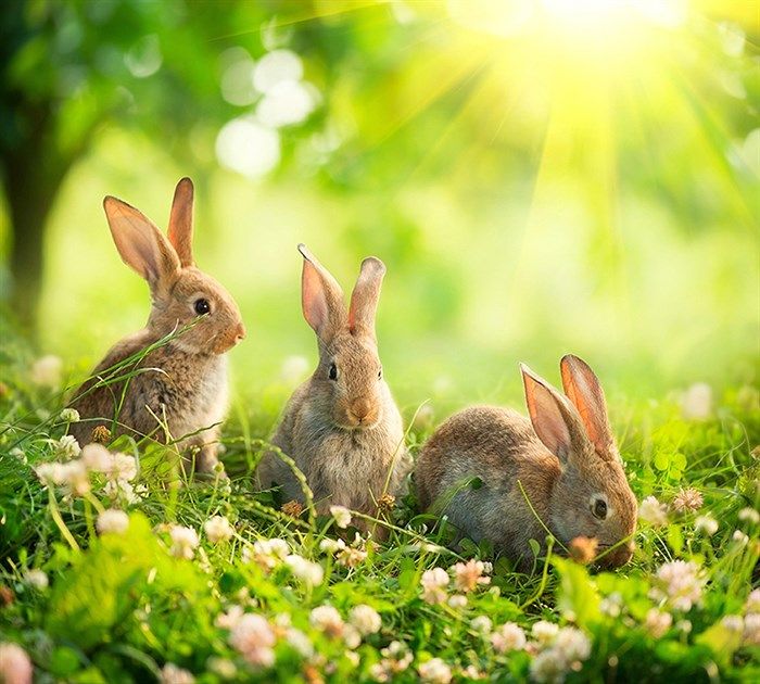 Фотообои DIVINO DECOR D-113 Кролики 300х270см - фото 18962