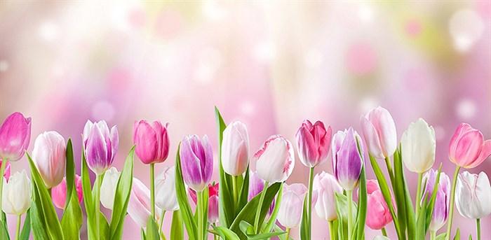 Фотообои DIVINO DECOR D-027 Тюльпаны 300х147см - фото 20035
