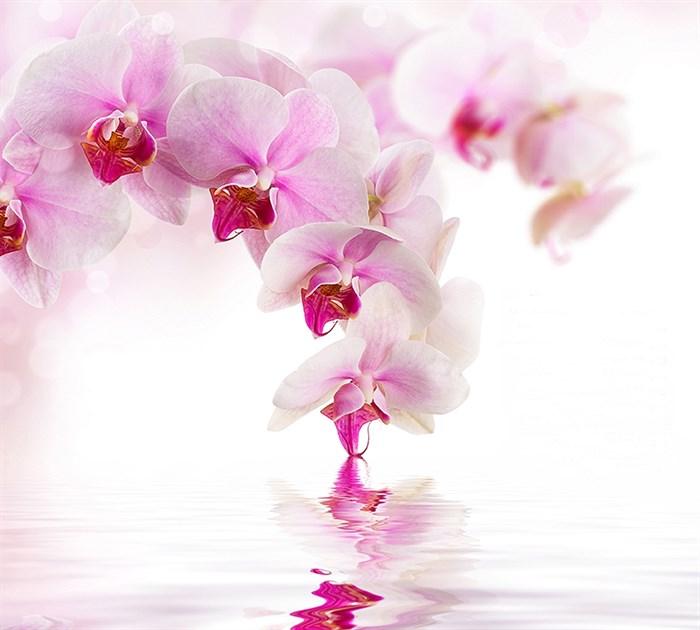 Фотообои DIVINO DECOR D-070 Розовая орхидея 300х270см - фото 20080