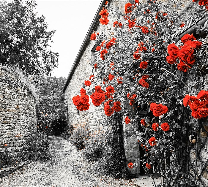 Фотообои DIVINO DECOR D-043 Красные розы 300х270см - фото 20144