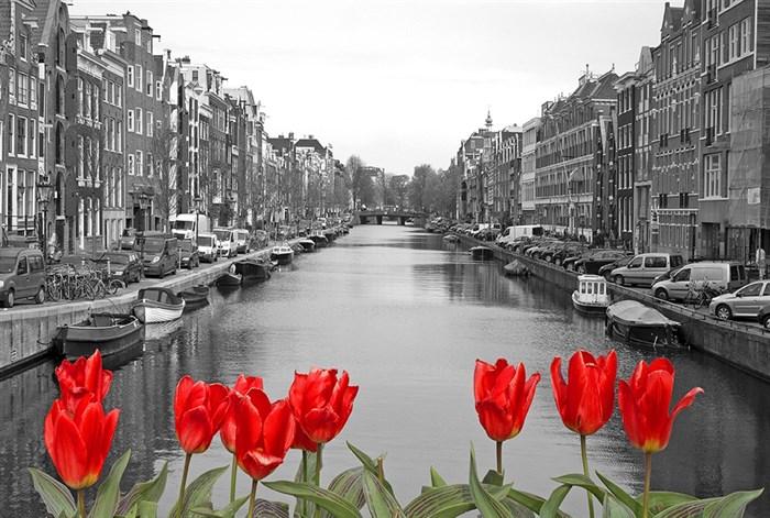 Фотообои DIVINO DECOR D-090 Красные тюльпаны  400х270см - фото 20180