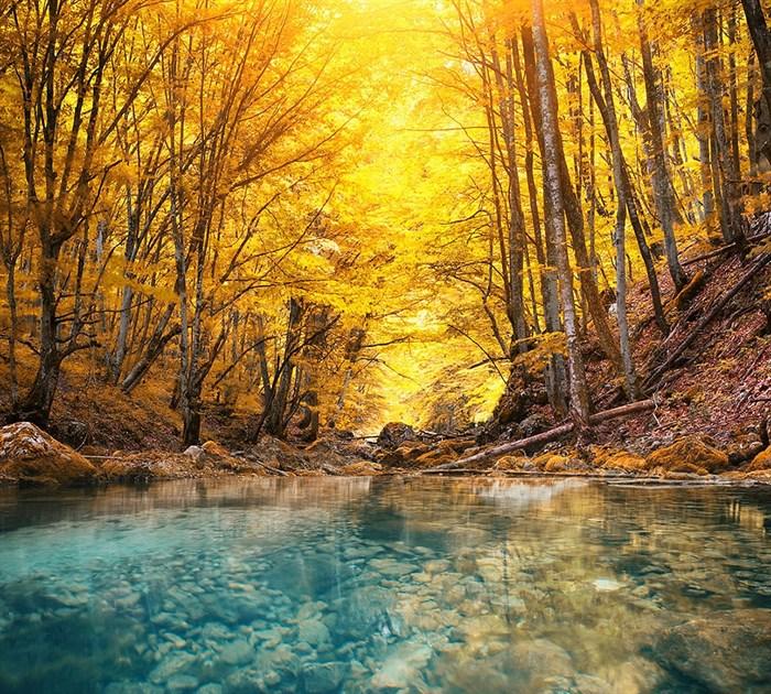 Фотообои DIVINO DECOR E-015 Желтый лес 300х270см - фото 21118