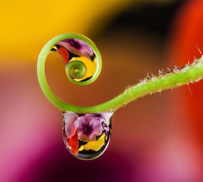Фотообои DIVINO DECOR E-077 Цветы в каплях 300х270см - фото 21283