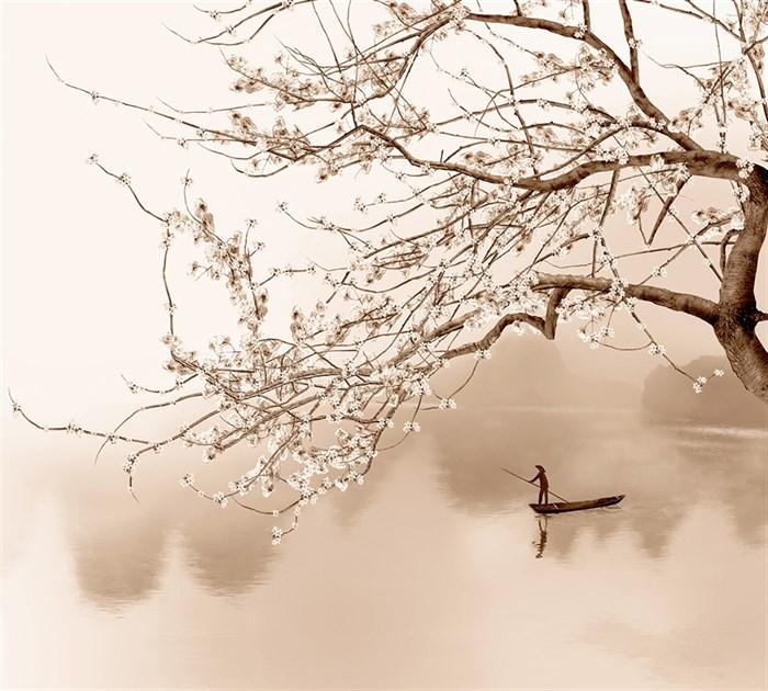 Фотообои DIVINO DECOR H-030 сакура над рекой 300х270см - фото 21679