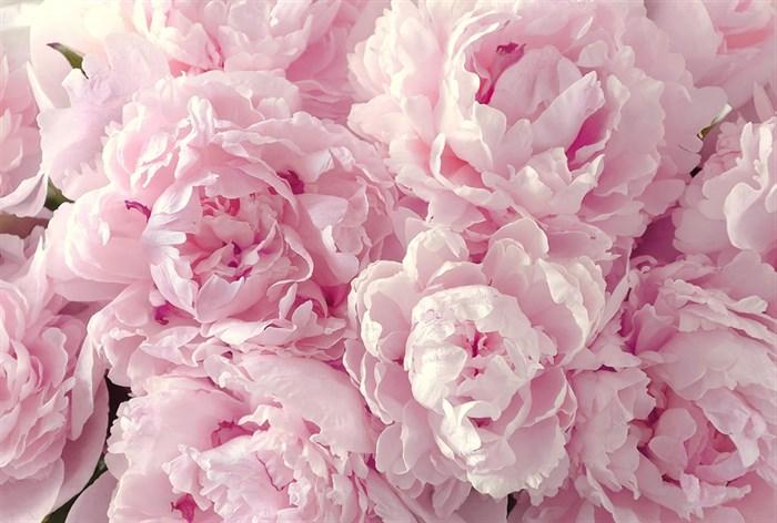 Фотообои DIVINO DECOR L-065 Пышные цветы 400х270см - фото 24596