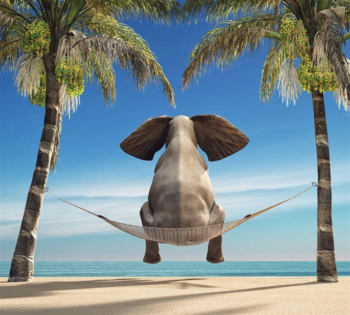 Фотообои DIVINO DECOR L-096 Слон на гамаке 300х270см - фото 24842