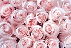 Фотообои DIVINO DECOR T-159 Нежные розовые розы 400х270см