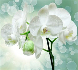 Фотообои DIVINO DECOR T-175 Веточка орхидеи 300х270см