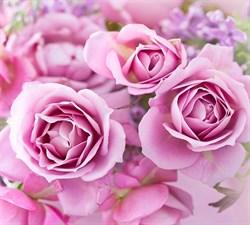 Фотообои DIVINO DECOR T-192 Прекрасные розы 300х270см