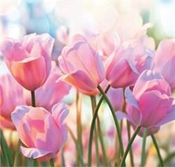 ФОТООБОИ BELLISSIMO B-019 Весенние тюльпаны 210х200 см Симфония