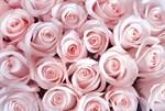 Фотообои DIVINO DECOR T-159 Нежные розовые розы 400х270см - фото 13791