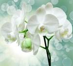 Фотообои DIVINO DECOR T-175 Веточка орхидеи 300х270см - фото 13837
