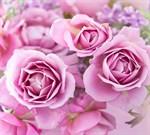 Фотообои DIVINO DECOR T-192 Прекрасные розы 300х270см - фото 13851
