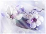 Фотообои DIVINO DECOR T-267 Цветки магнолии 200х147см - фото 14630