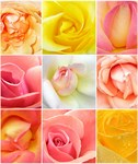 Фотообои DIVINO DECOR A-039 Розы микс 200х238см - фото 15401