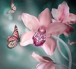 Фотообои DIVINO DECOR A-030 Бабочки 300х270см - фото 15410