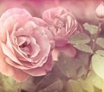 Фотообои DIVINO DECOR A-079 Розы 300х270см - фото 15419