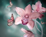 Фотообои DIVINO DECOR A-046 Бабочки 300х238см - фото 15428