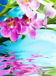 Фотообои DIVINO DECOR B-096 Цветки орхидеи 200х270см - фото 15605