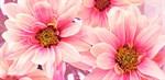 Фотообои DIVINO DECOR B-099 Цветы романтика 300х147см - фото 15614