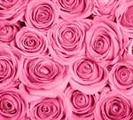Фотообои DIVINO DECOR B-092 Розы розовые фон  300х270см - фото 15668